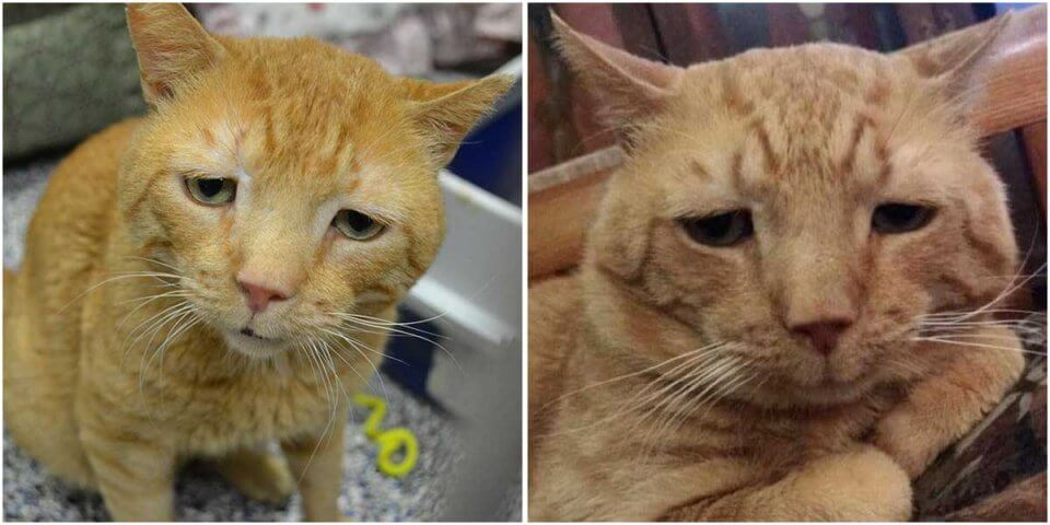 """Saddest Cat"" Finds His Smile After Nine Months of Waiting for His Purrfect Home"