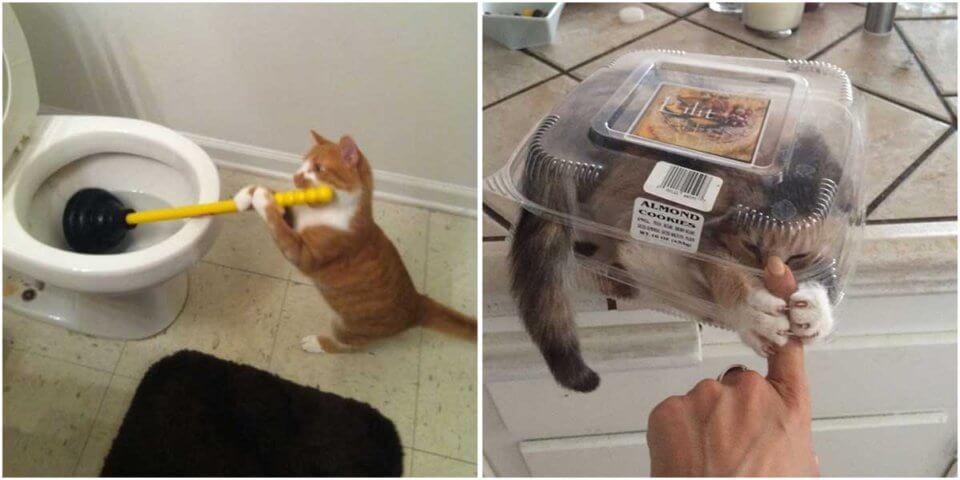 Cat Posts On Tumblr That Are Impossible Not To Laugh At