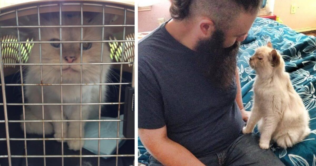 17-Year-Old Abandoned Cat Tells Her New Family How Grateful She Is For Them Every Day