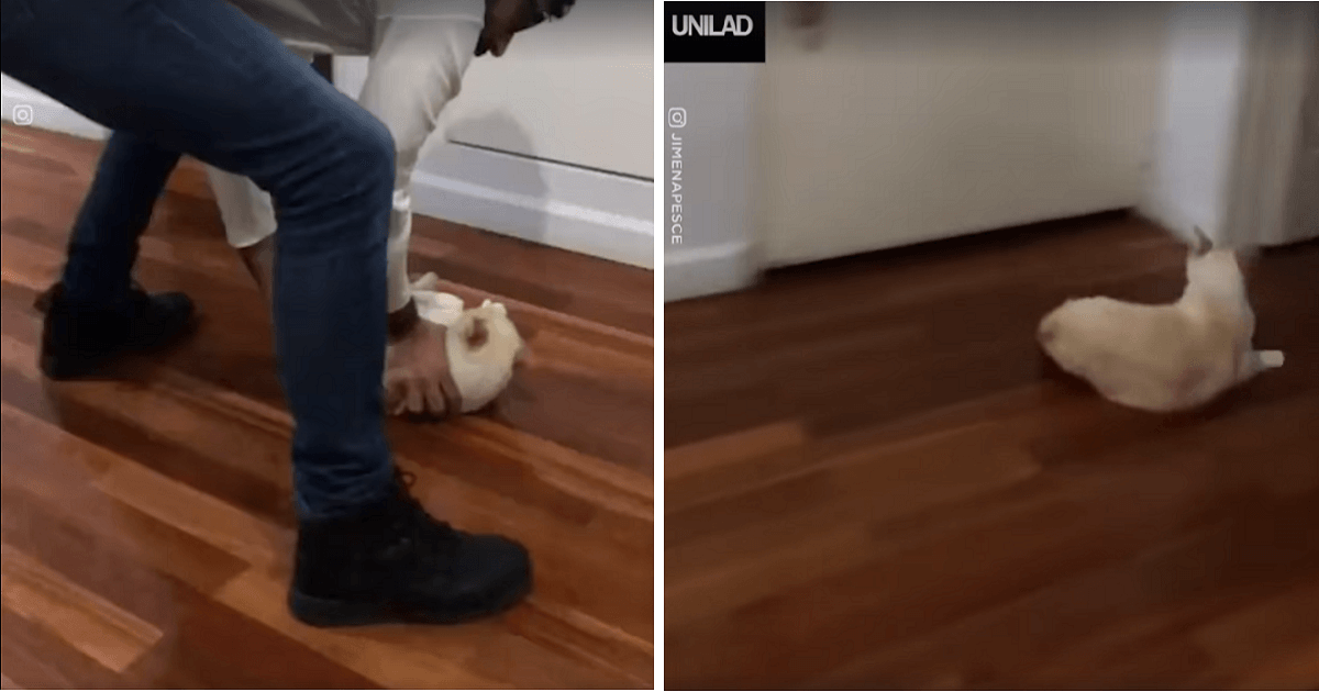 Cat Loves Sliding Across The Floor And Its Human Is Happy