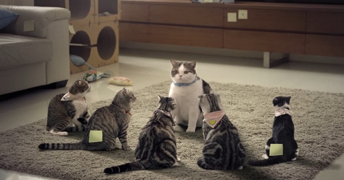 Gangster Cats Hatch A Plan In Hilarious Bathroom