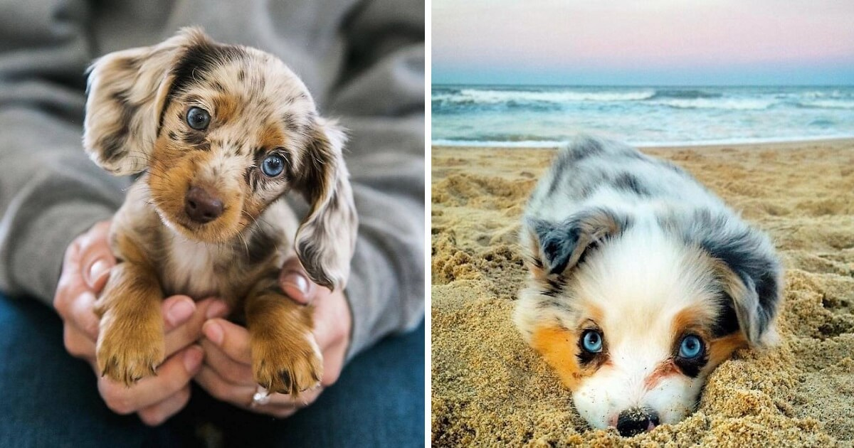 20+ Of The Cutest Puppies Ever