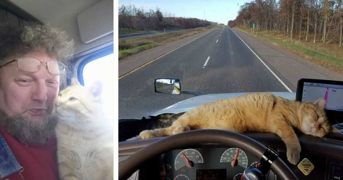 Lonely Truck Driver Adopts Stray Cat