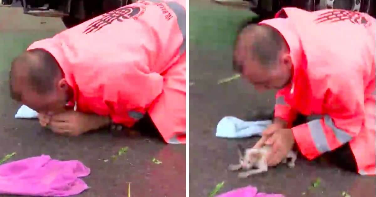 Heroic Road Worker Brings Drowning Kitten Back To Life And Adopts Her