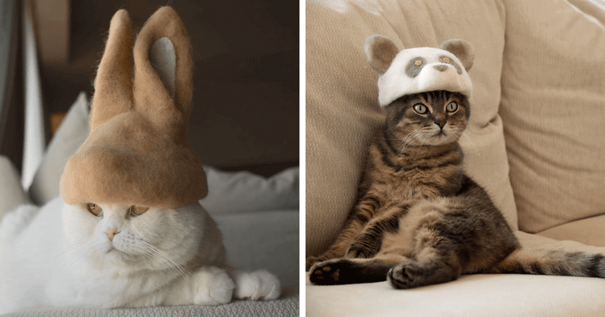 30 Hilarious Photos Of Cats Wearing Hats Made From Their Own Shed Fur