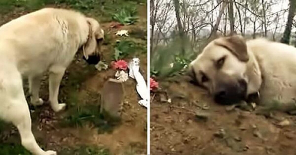 Faithful Pup Usually Visits His Dad's Grave To Be Close To His Beloved