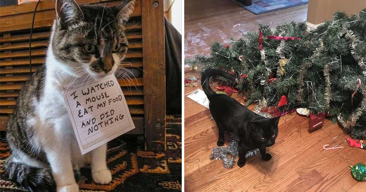 "20+ Pictures Proving That Cats Are Actually ""Bad"" Roommates"