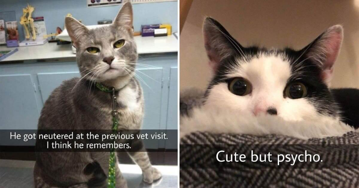 Cats Who Are Completely Unaware Of How Funny And Ridiculous They Are
