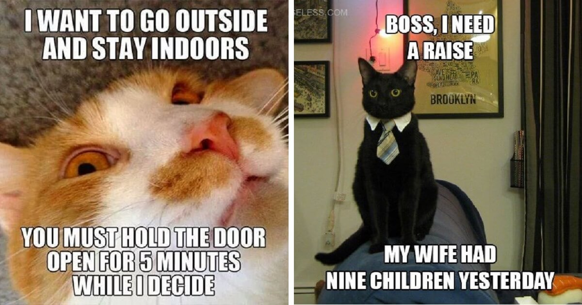 The Best Funny Cat Memes That Will Make You Laugh Out Loud ...